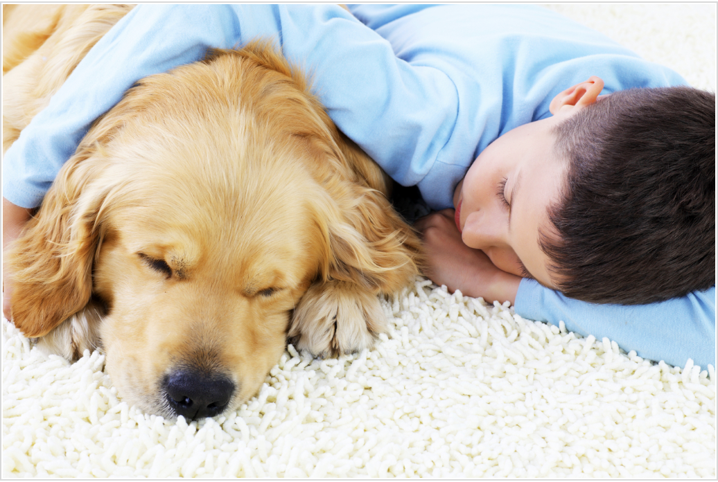 Boy cuddling with dog on plush carpet